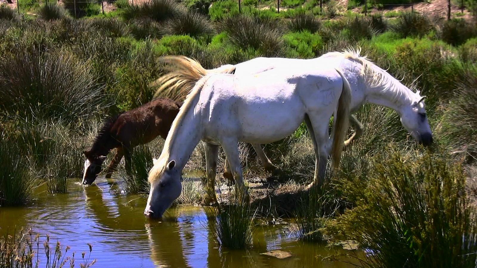 Sfondi paesaggio animali creatura acqua natura for Animali da stagno