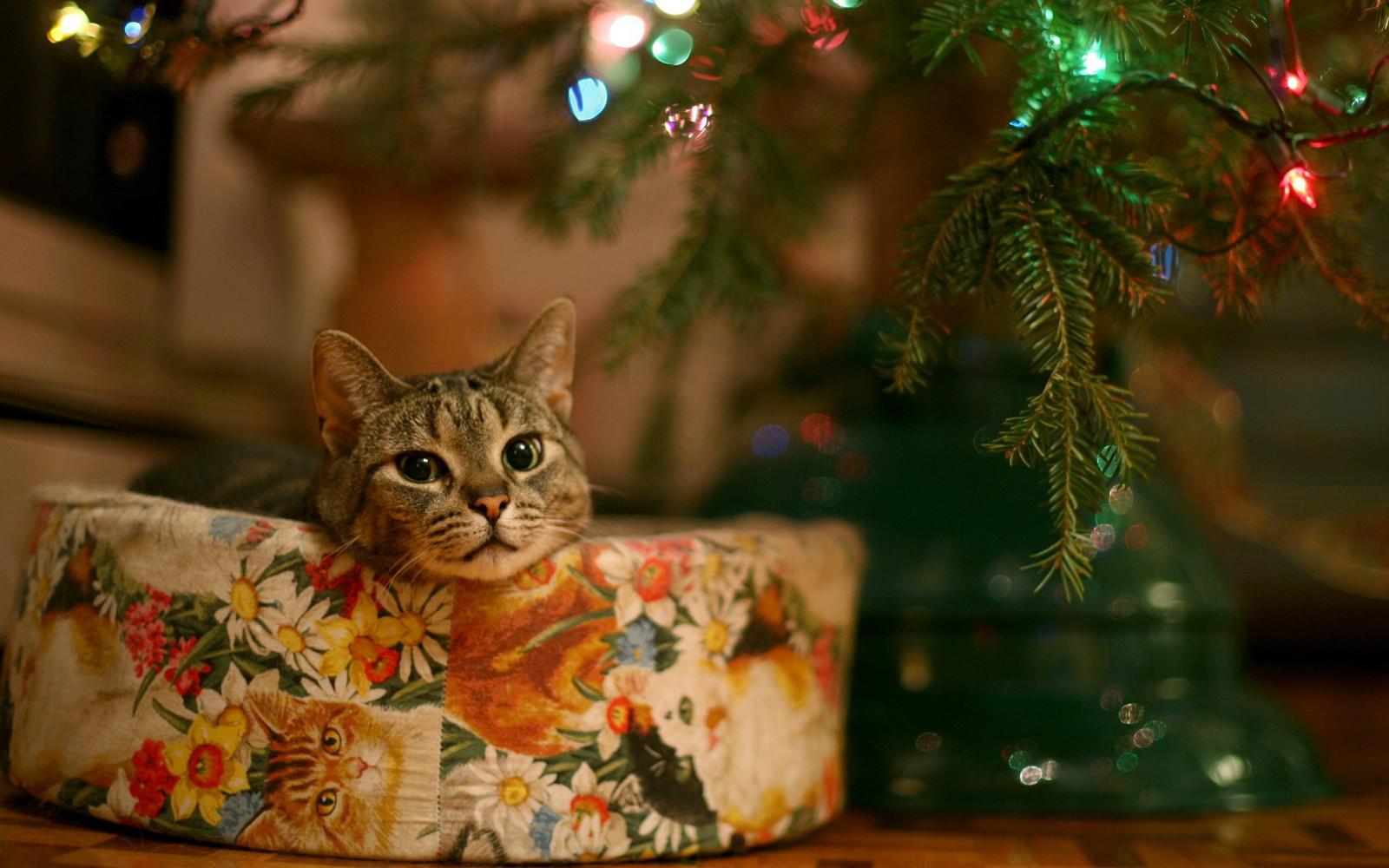 New Year Cat Wallpaper