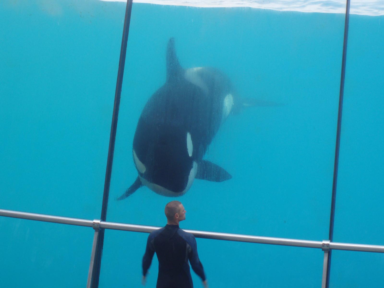 デスクトップ壁紙 フランス イルカ 鯨 オルカ シャチ 抗生物質