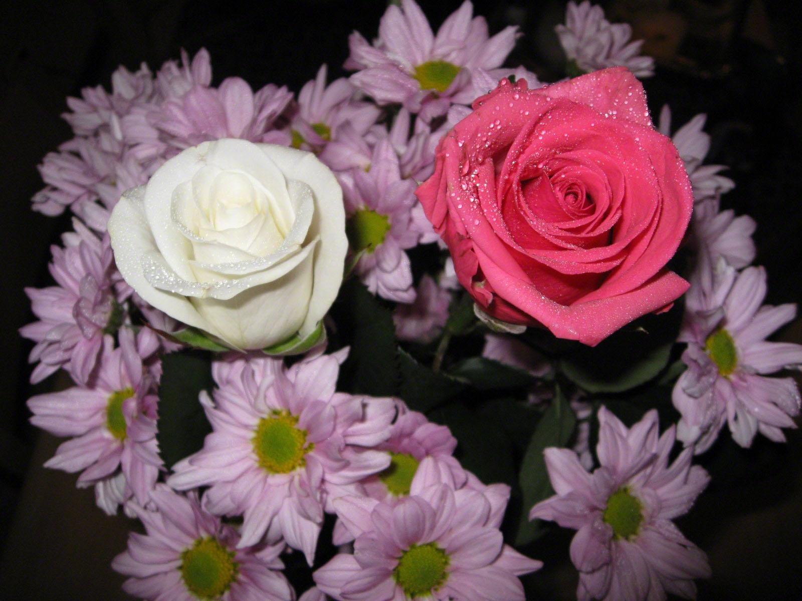 Afskårne Roser baggrunde : lyserød, krysantemum, blomst, dråbe, flora, roser, buket
