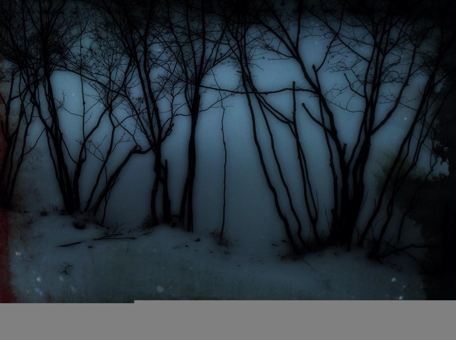 デスクトップ壁紙 日光 木 森林 ダーク 雪 冬 ブランチ 氷